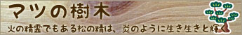 マツの樹木(松の木)